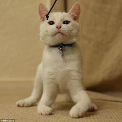 La belle histoire de Harvey, un chat (presque) comme les autres