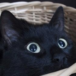 comment pr parer et rassurer un chat qui a peur des feux d 39 artifice eduquer son chat wamiz. Black Bedroom Furniture Sets. Home Design Ideas