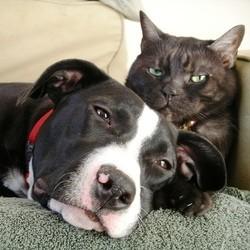 assurance pour chien chat mutuelle pas cher