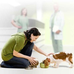 assurance pour chien chat santevet optimal