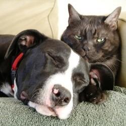assurance pour chien chat
