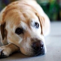 maltraitance sur les animaux spa brigitte bardot