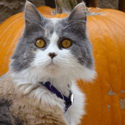 chat et citrouille