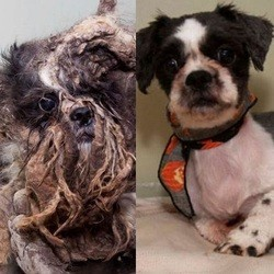 métamorphose chien abandonné
