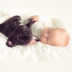 Bouledogue français et bébé