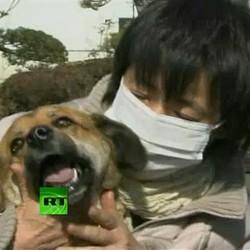 chien japon sauvé mer tsunami ban