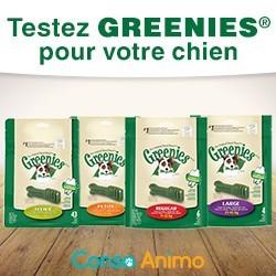 friandises bucco-dentaires pour chien Greenies
