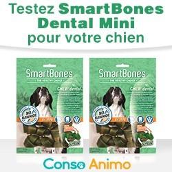 friandises pour chien SmartBones Chew+ Dental Mini