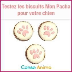 biscuits pour chien mon pacha