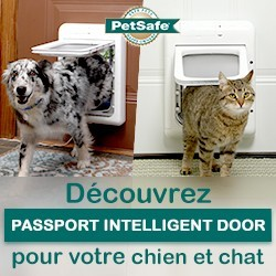 testez gratuitement la chati re passport intelligent door de petsafe conso wamiz. Black Bedroom Furniture Sets. Home Design Ideas