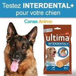 Interdental+ ULTIMA
