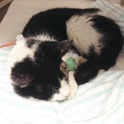 chat enterré vivant