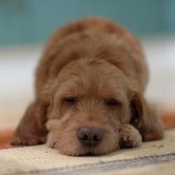un chien sauvé de la noyade sauvetage