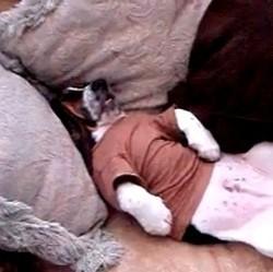 bassey hound ronbfle sur le dos