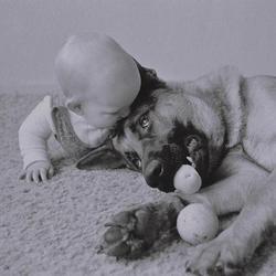 chien adopte bébé ghana