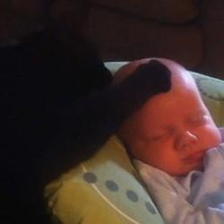 chat aide bébé dormir video