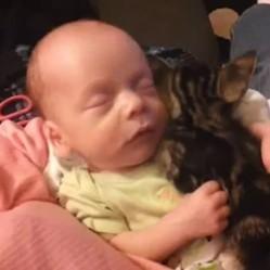 un chaton dort dans les bras d'un bébé