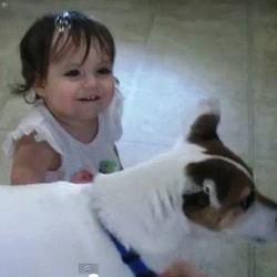 bebe chien bulles video