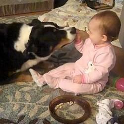 bebe partage repas chien video