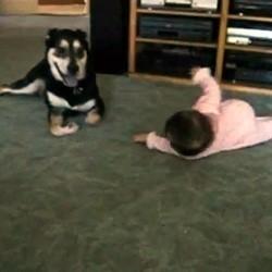 bebe chien video roule par terre