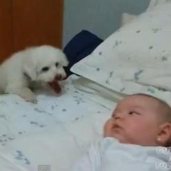 chiot bébé amis pour la vie video