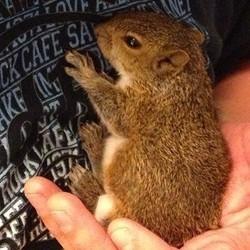 Un bébé écureuil miraculé sauvé