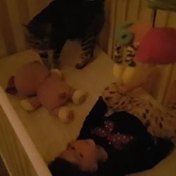 bébé et chat parlent le même langage