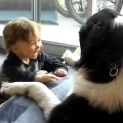 bebe parle langage chiens video