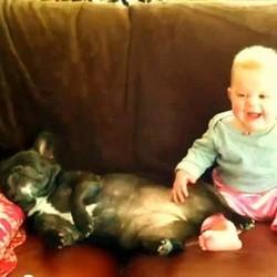 bebe rit chien ronfle video