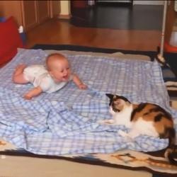 des chats et des bébés