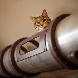 tuyau pour chat