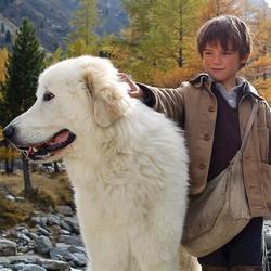 belle et sébastien, chien de montagne des pyrénées