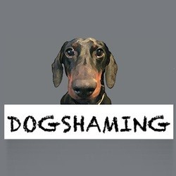 betises de chiens dog shaming
