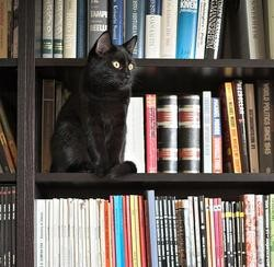 chat bibliotheque
