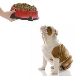 alimentation chien poids santé