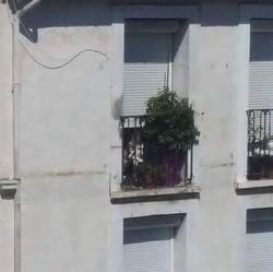 Chien bloqué à Béziers