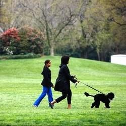Bo Obama Caesar Millan éducateur canin