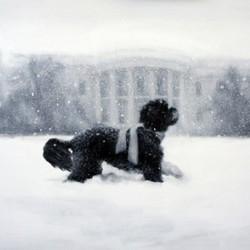 bo, le chien de Barack Obama, sur la carte de voeux du président américain et sa famille