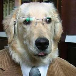 maitre responsable chien