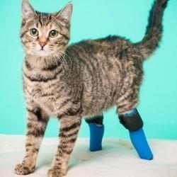 Chat avec prothèses