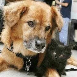 chien chaton