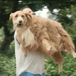 bouboule chien obèse pub ikea