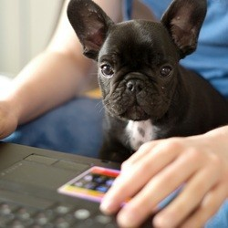chien ordinateur