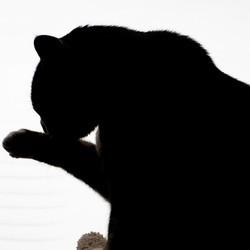 boules de poils herbe à chat