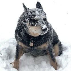 chien héros sauve une fillette du froid glacial