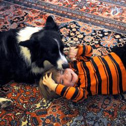 un chien veille sur un petit garçon disparu et permet de le retrouver
