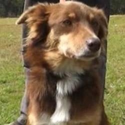 un chien héros veille sur son maître et le réchauffe pendant 4 jours