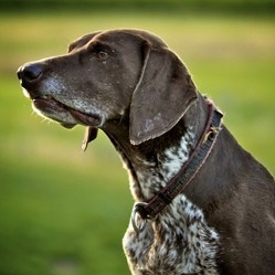 une femme offre une récompense de plus de 10 000 euros pour retrouver son chien enlevé