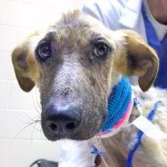 braveheart chien torture