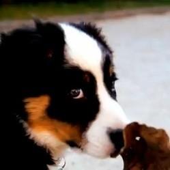 parodie bref video chien